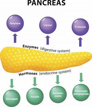 neuroendocrine cancer pain tipuri de viermi și medicamente