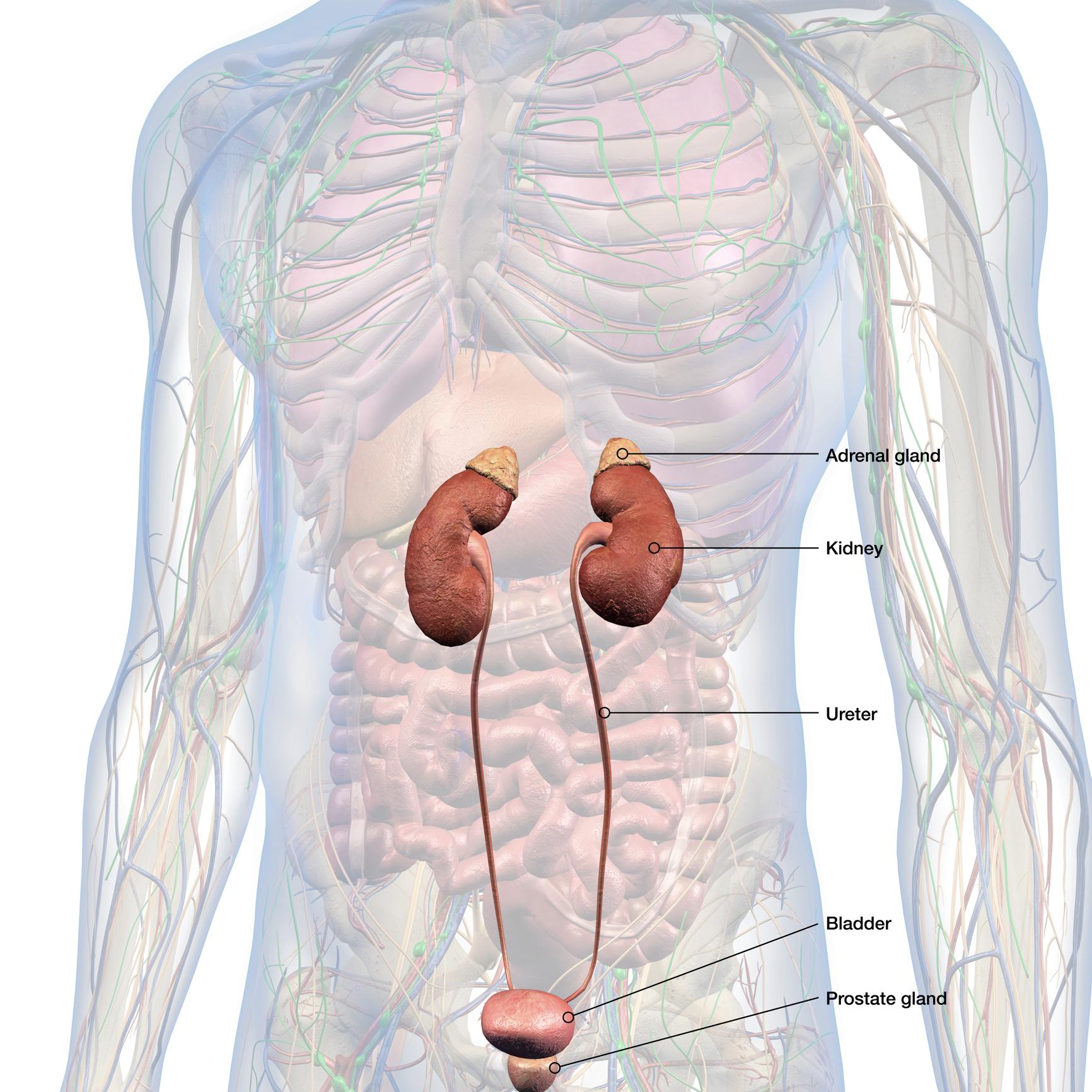 neuroendocrine cancer headache